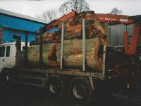 Tree trunks loaded on lorry